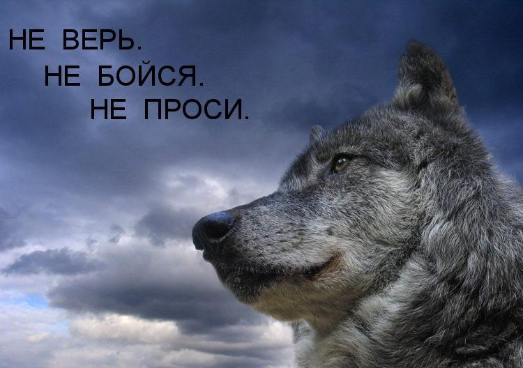 не верь не бойся не проси