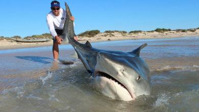 Photo of Самые опасные пляжи с акулами