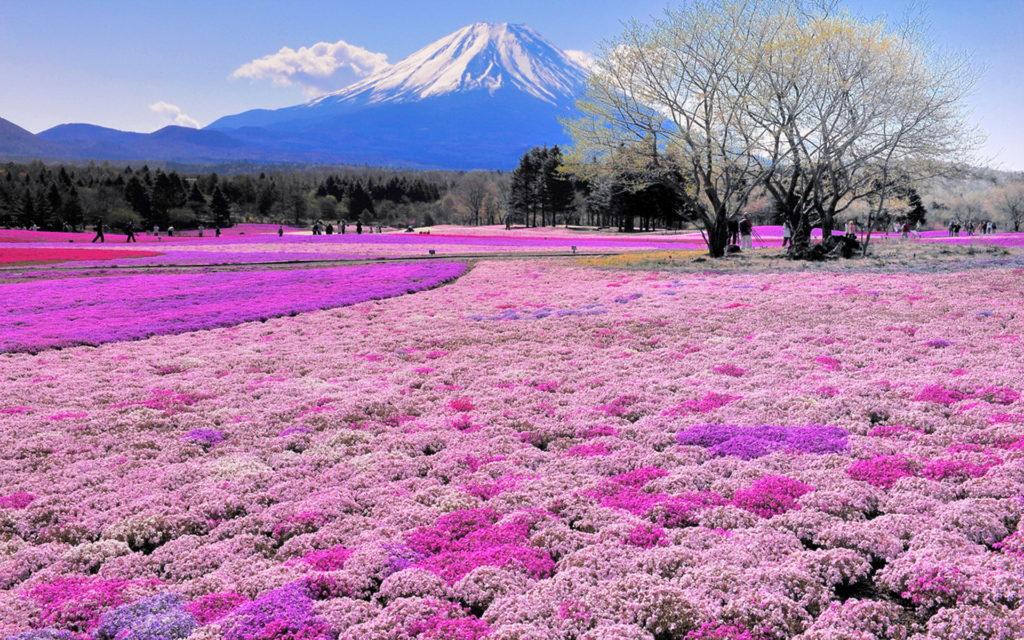 Цветочный парк Хитачи