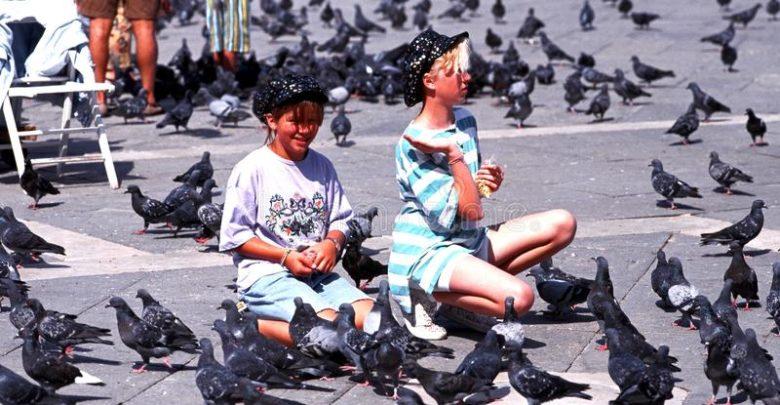 голуби в Венеции