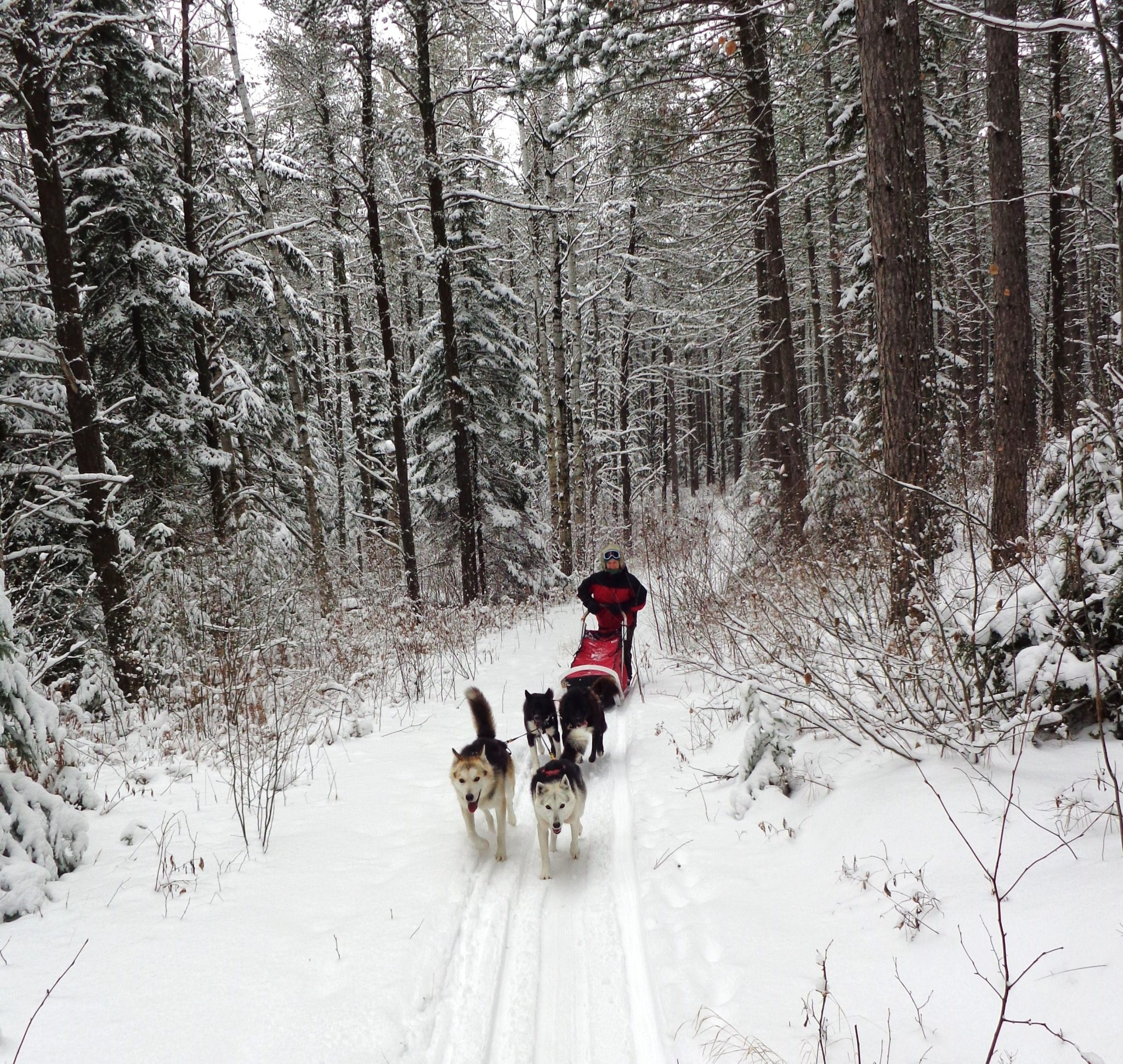 White Wilderness Sled Dog Adventures