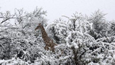 Photo of Снег в Африке: миф или реальность
