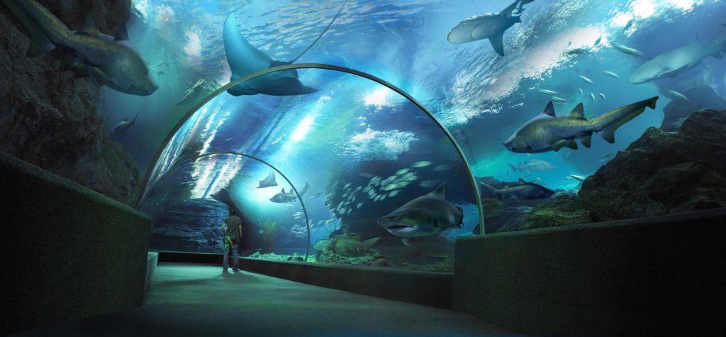 подводный мир паттайя