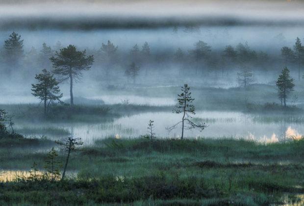 болото