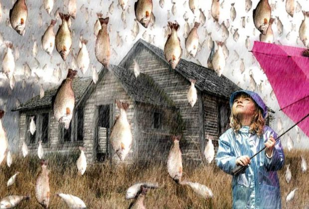 Рыбный «дождь»