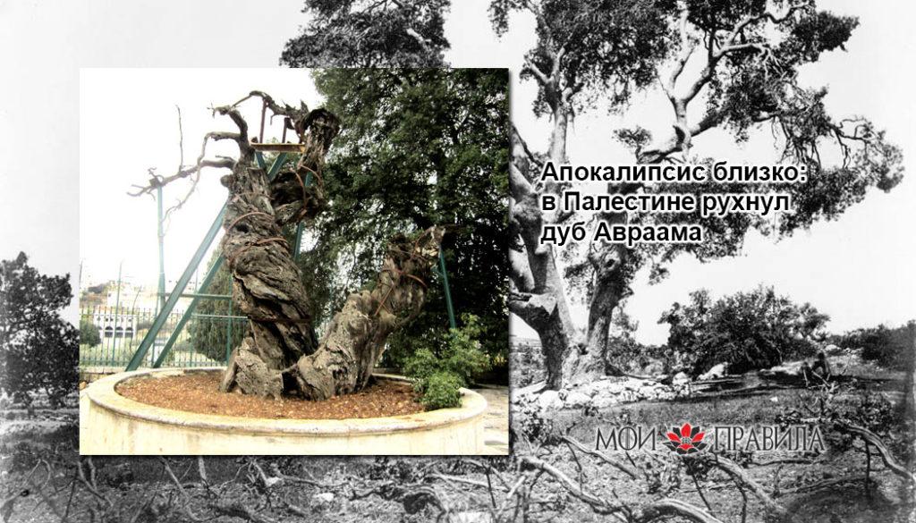 Photo of Апокалипсис близко: в Палестине рухнул дуб Авраама