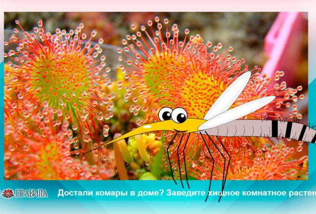 Заведите хищное комнатное растение!