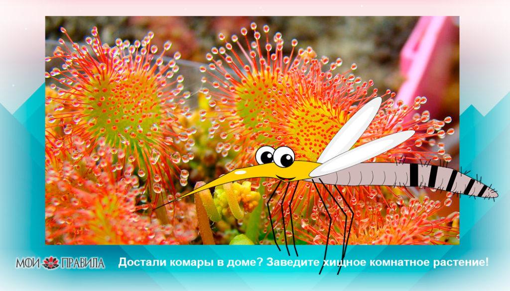 Photo of Достали комары в доме? Заведите хищное комнатное растение!