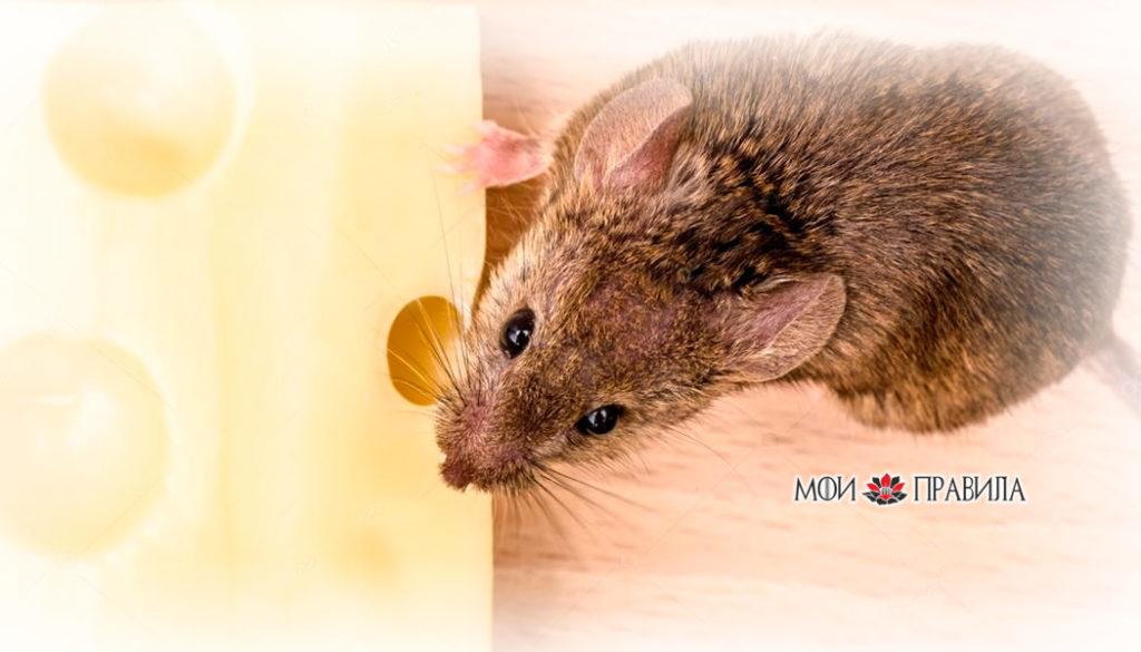 Photo of Народные приметы о мышах