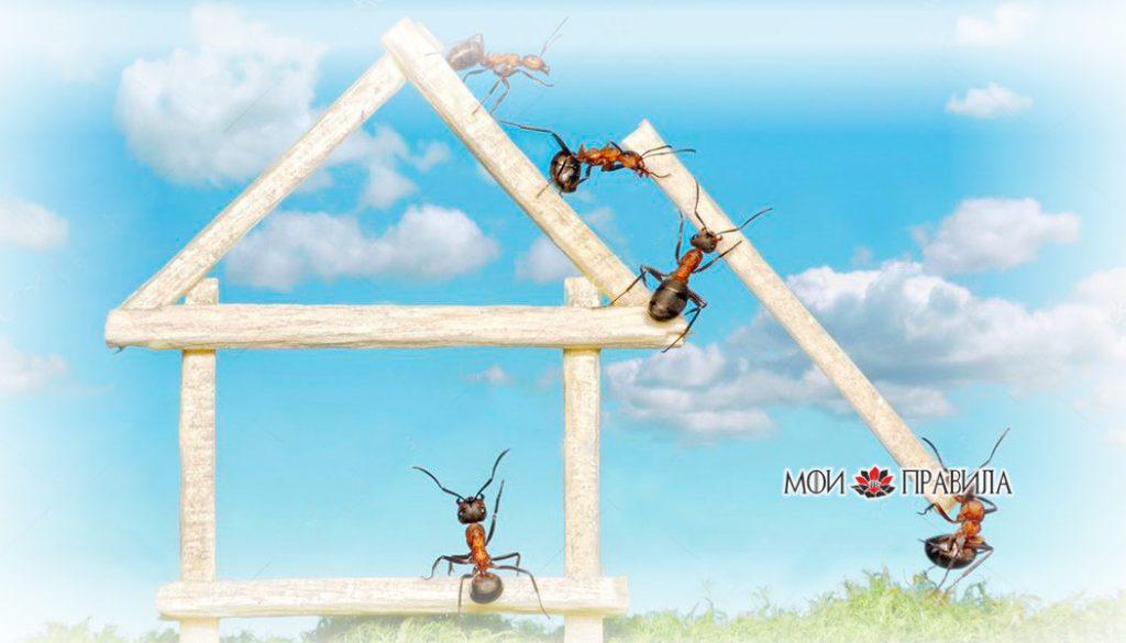 Photo of К чему в доме появляются муравьи – приметы
