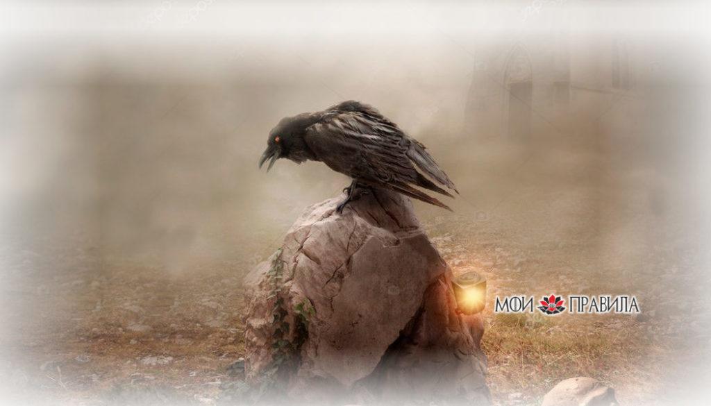 ворона - примета