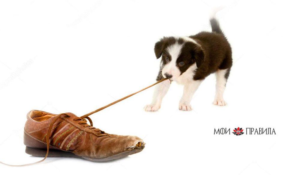 Ботинок тянет собачка