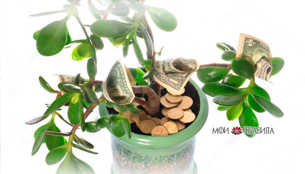Толстянка с деньгами