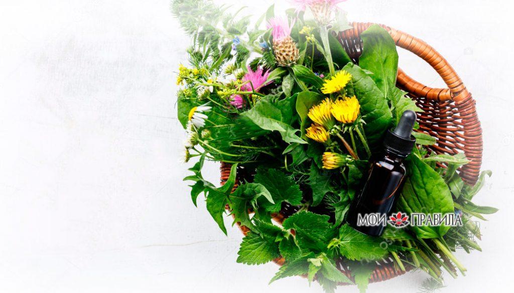 Photo of Травы талисманы – природная защита