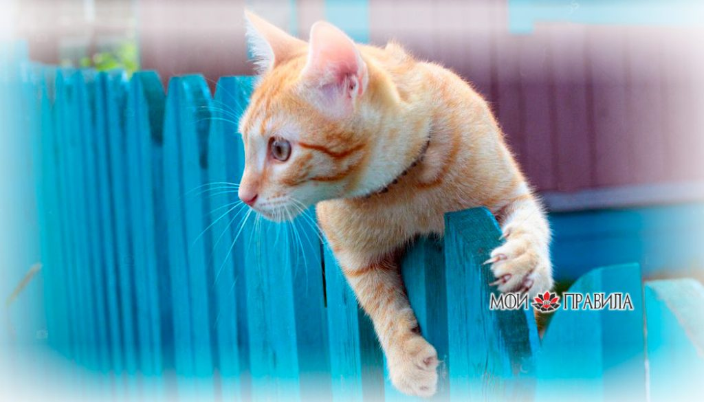 Photo of Сбежала из дома кошка или собака – к чему это?