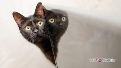 Photo of Откуда взялись предрассудки по поводу черных котов