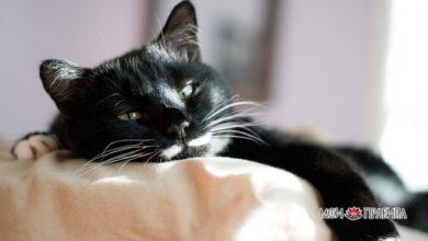 Photo of Почему кошка гадит на кровать, народные приметы