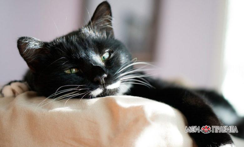 Кот на кровате