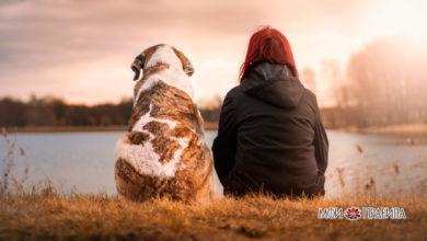 Photo of Как по породной принадлежности собаки определить характер ее хозяина?