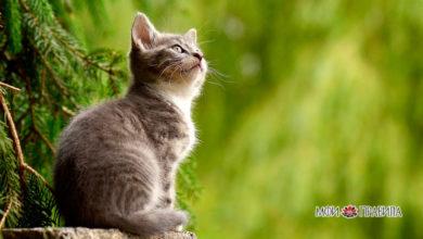 Photo of Самые распространенные народные приметы о кошках