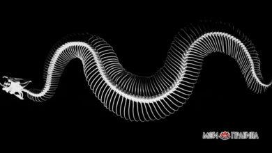Photo of Привиделась мертвая змея: что символизирует этот сон