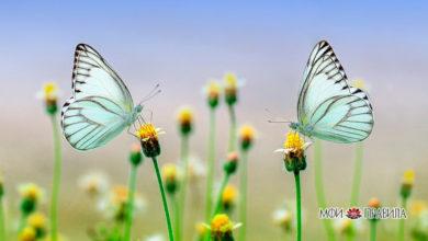 Photo of Народные приметы о бабочках