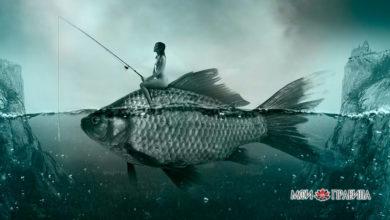 Photo of К чему снится рыба?