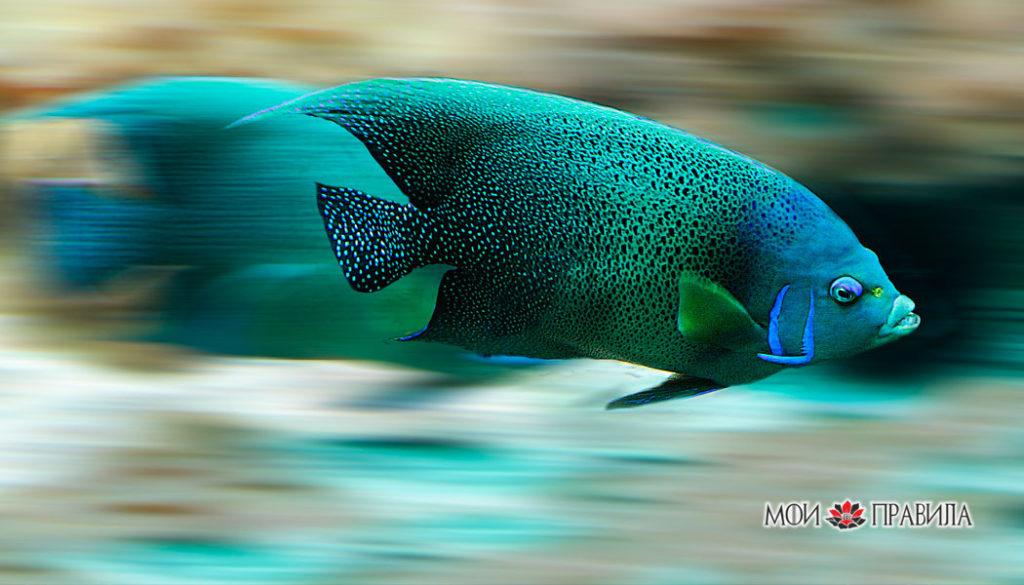 Рыба плывет