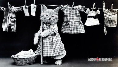 Photo of Кошка в доме — к счастью? – с чем связана примета